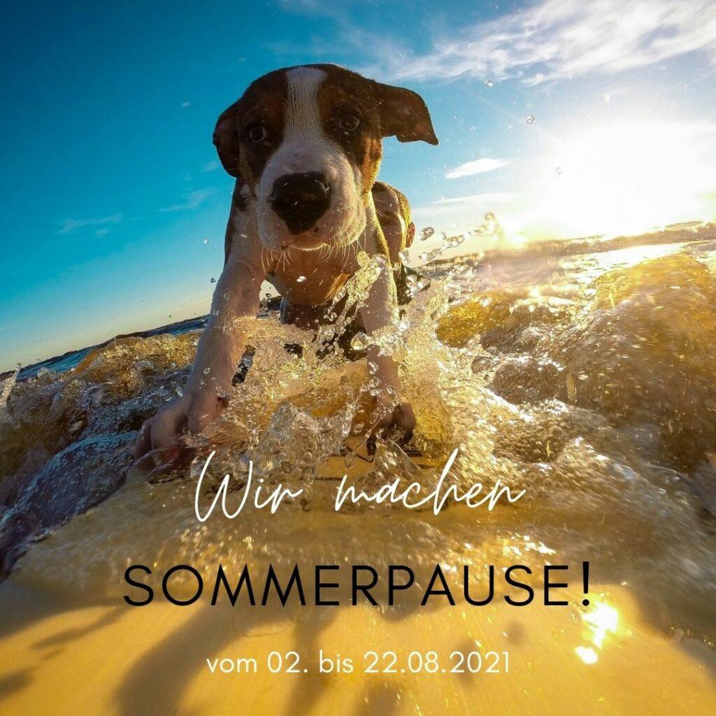 Bild: Hund auf Surfbrett, Info Sommerpause